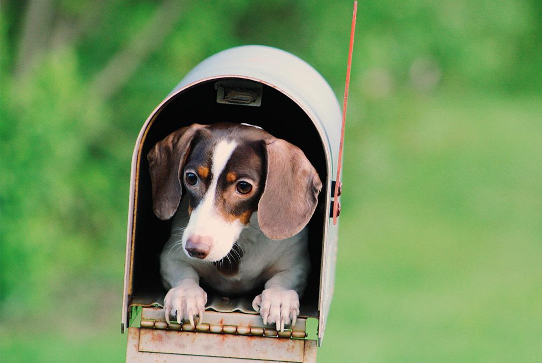 Un chien dans une boîte aux lettres